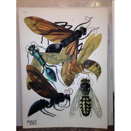 E.A SEGUY, insectes 1929