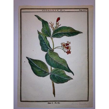 DUHAMEL DU MONCEAU 1772