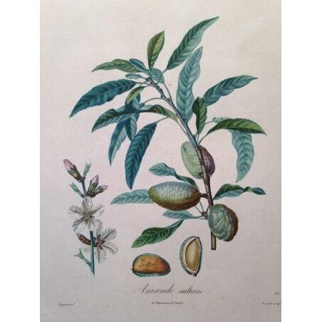 POITEAU, la pomologie française 1846