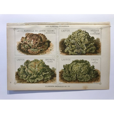 VILMORIN ANDRIEUX , les plantes potagères 1897