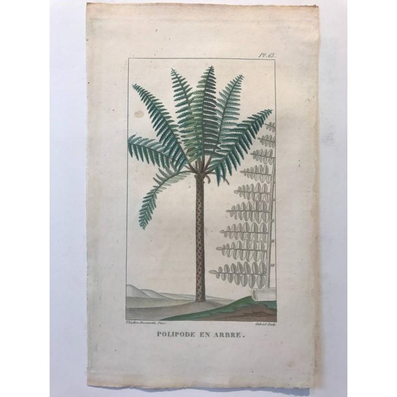 Flore des Antilles,