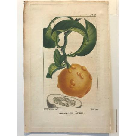 Flore des Antilles, Oranger âcre