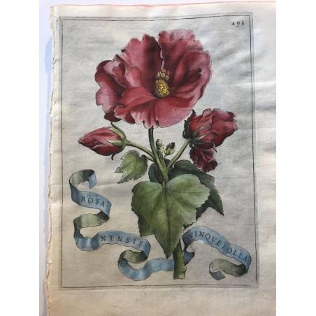FERRARI, Florum Cultura, Rome, 1633