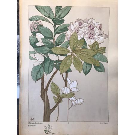 SEGUY,les fleurs et leurs applications décoratives