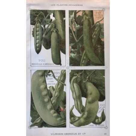 Vilmorin-Andrieux, les plantes potagères 1897