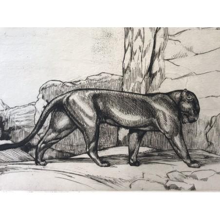 Phantere noire, André MARGAT, 1929