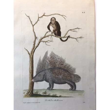 J.W.KNORR, les délices de la nature 1774