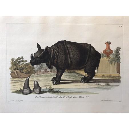 J.W.KNORR, les délices de la nature 1774, rhinocéros