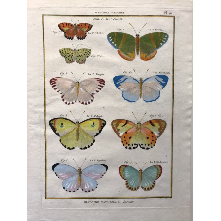 Papillons, Danaides blanches, Encyclopédie Diderot et d'Alembert, 1770