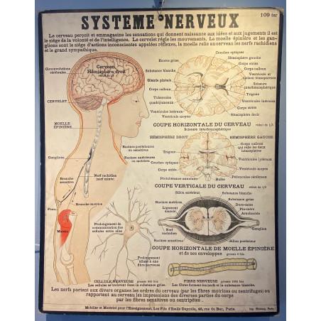 Système nerveux, les fils d' Emile Deyrolle, Paris, vers 1900