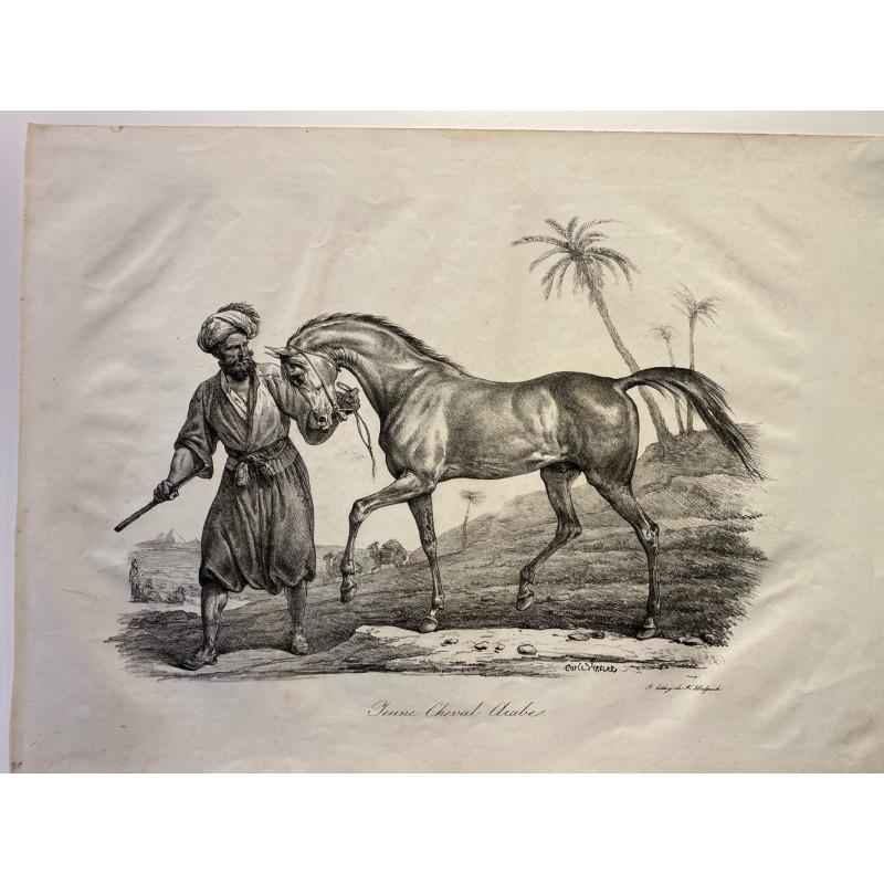 Carle Vernet, la grande suite de chevaux, 1820. Jeune cheval Arabe.