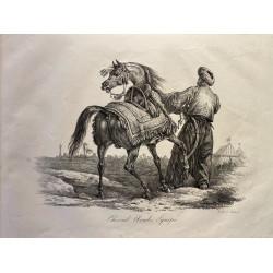 Carle Vernet, la grande suite de chevaux, 1820. Cheval Arabe équipé.
