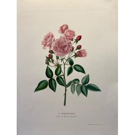 Anica Bricogne, le choix des plus belles roses, 1845-1855