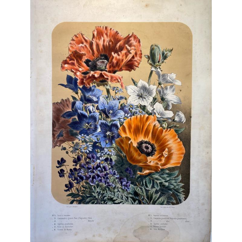 Bouquet de fleurs, Elisa CHAMPIN pour Vilmorin et Andrieux, vers 1850-1860. Pavots