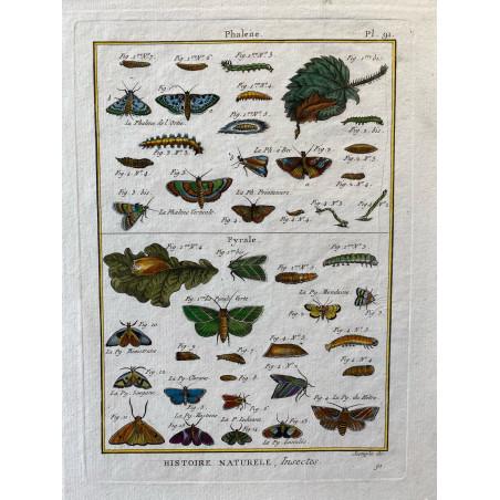 Papillons, phalène, Encyclopédie Diderot et d'Alembert, 1770