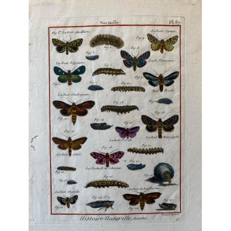 Papillons,Noctuelle , Encyclopédie Diderot et d'Alembert, 1770