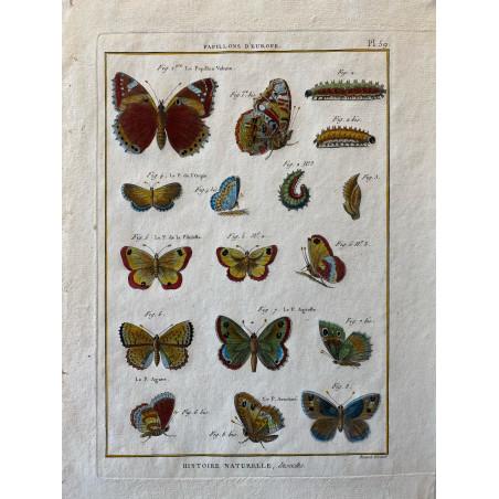 Papillons, Papillons d'Europe , Encyclopédie Diderot et d'Alembert, 1770