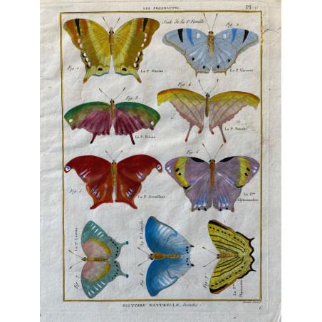 Papillons,Les argonautes , Encyclopédie Diderot et d'Alembert, 1770