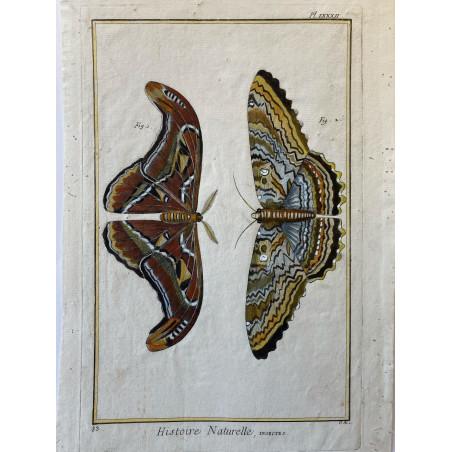 Papillons, , Encyclopédie Diderot et d'Alembert, 1754