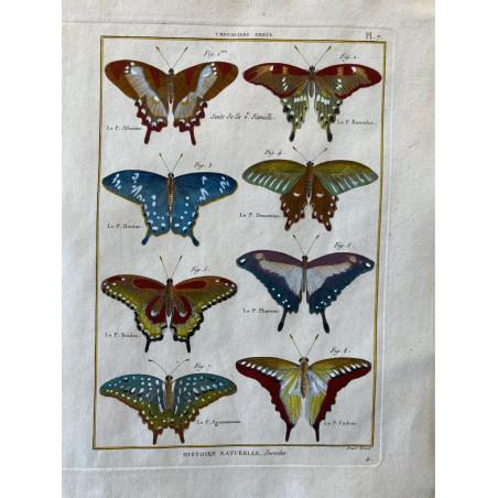 Papillons, Chevaliers Grecs , Encyclopédie Diderot et d'Alembert, 1770