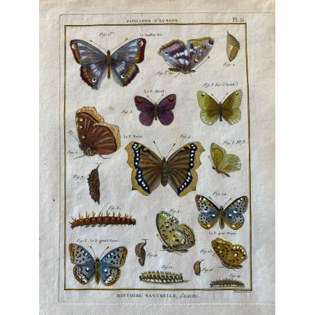 Papillons, Papillons d' Europe , Encyclopédie Diderot et d'Alembert, 1770