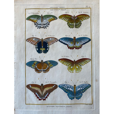 Papillons, Chevaliers Troyens, Encyclopédie Diderot et d'Alembert, 1770