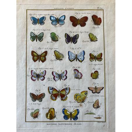 Papillons, Papillons d'Europe, Encyclopédie Diderot et d'Alembert, 1770