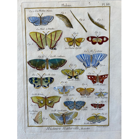 Papillons, Phalène , Encyclopédie Diderot et d'Alembert, 1770