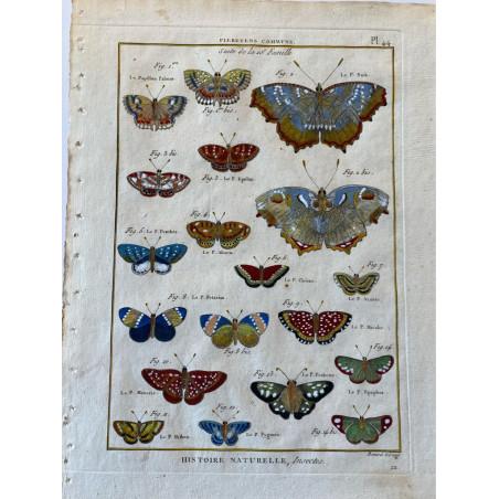Papillons, Plebeyens communs , Encyclopédie Diderot et d'Alembert, 1770