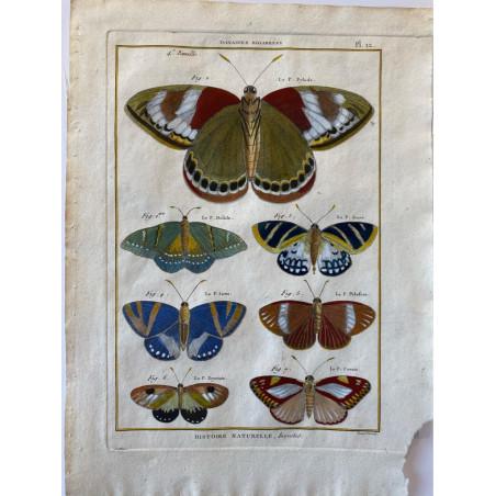 Papillons, , Encyclopédie Diderot et d'Alembert, 1770