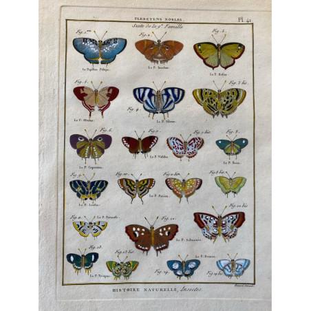 Papillons, Plebeyens nobles , Encyclopédie Diderot et d'Alembert, 1770