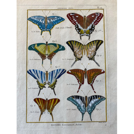 Papillons, Chevaliers Grecs, Encyclopédie Diderot et d'Alembert, 1770