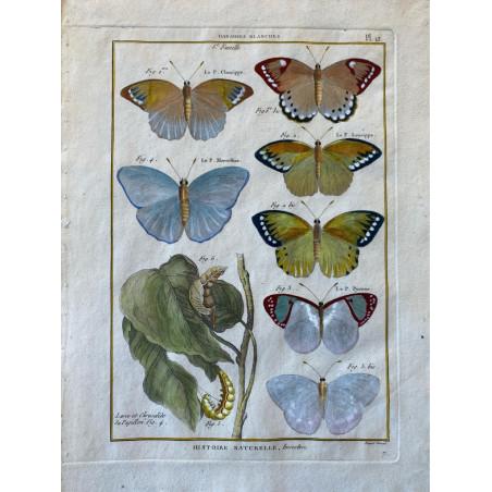 Papillons, Danaides blanches , Encyclopédie Diderot et d'Alembert, 1770