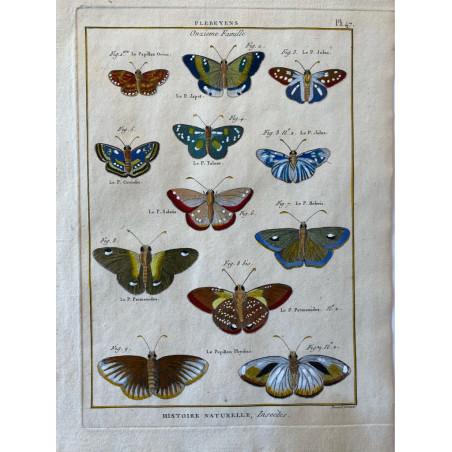 Papillons, Plebeyens , Encyclopédie Diderot et d'Alembert, 1770