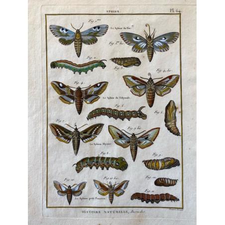 Papillons, Sphinx , Encyclopédie Diderot et d'Alembert, 1770